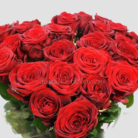 Бордовые розы доставка
